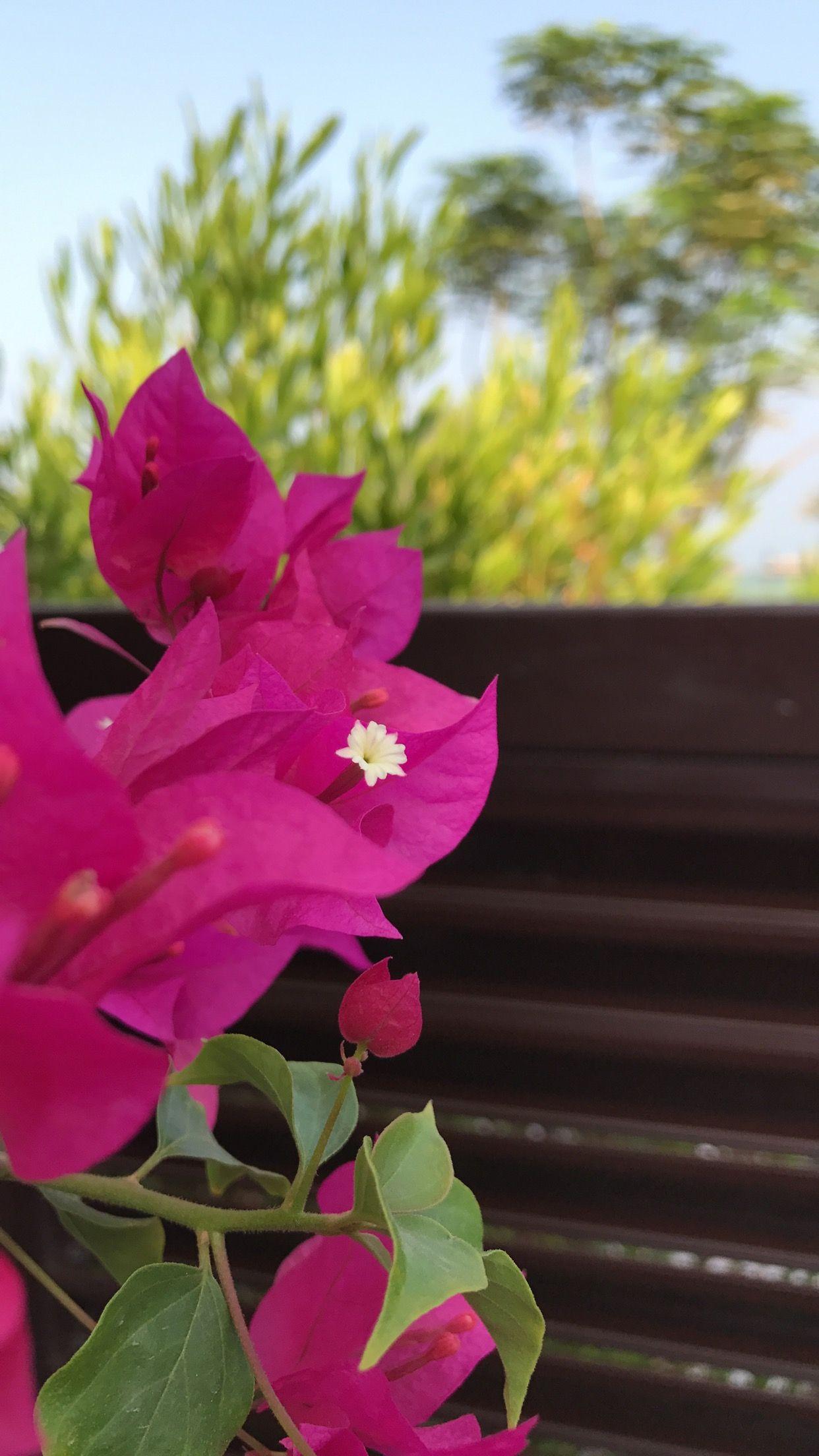 Pin By بثينة الكواري On ورد الربيع Plants