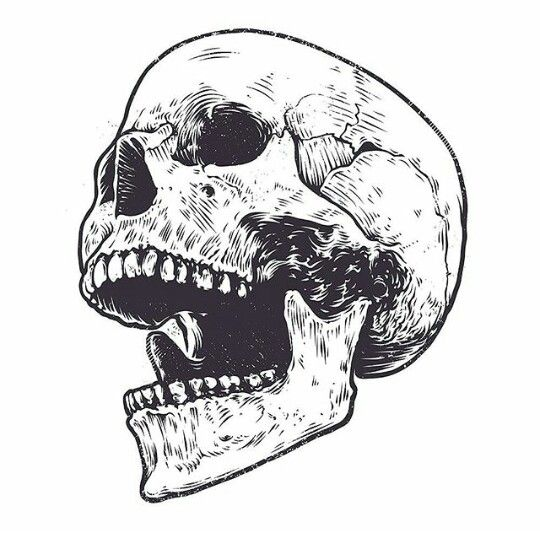 Pin By Lion Juda On Sketches Skull Art Drawing Skull Illustration Skulls Drawing