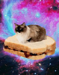 Everyone needs this fabulous space cat on his profile