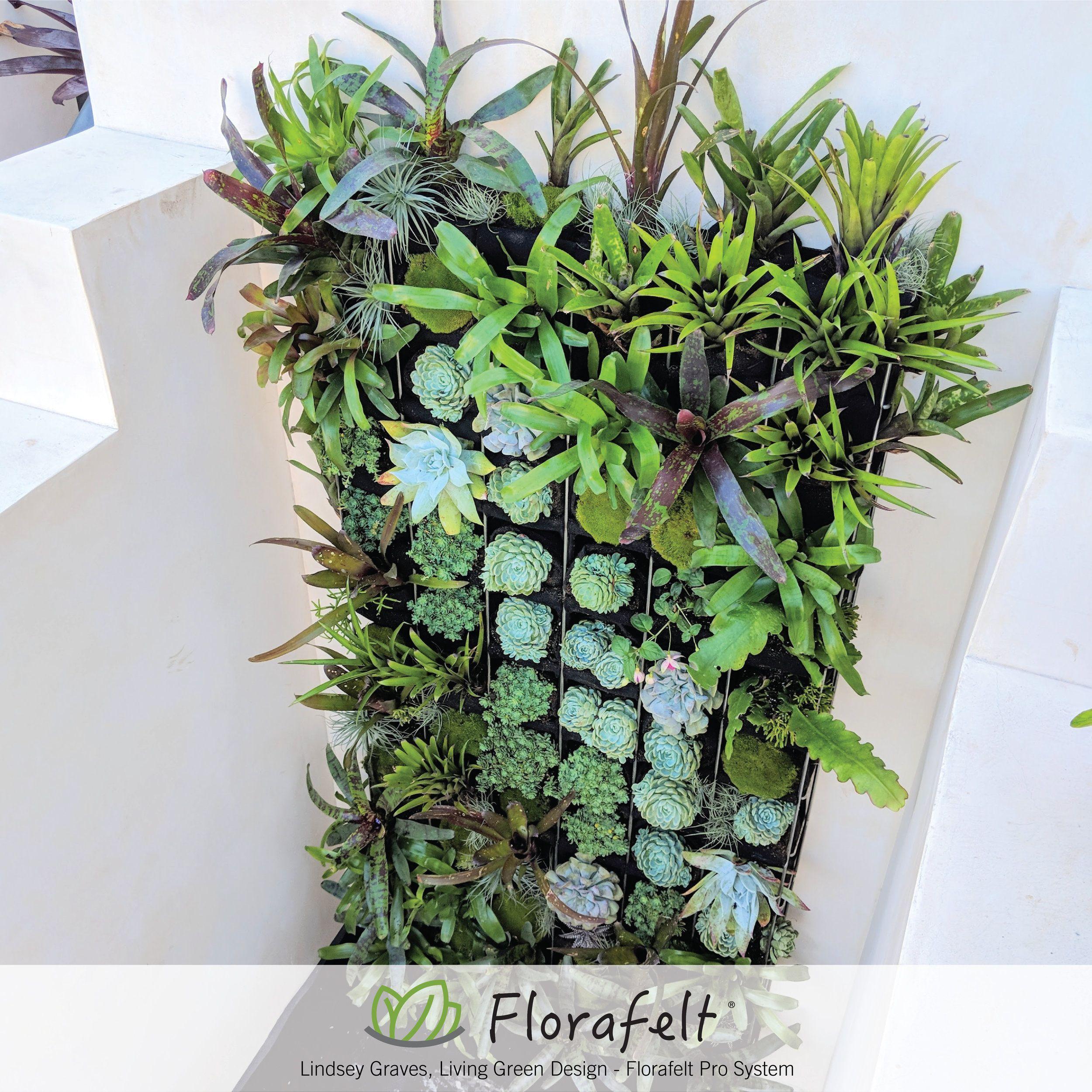 38 Florafelt Pro System Ideas Green Wall Vertical Garden Vertical Garden Systems