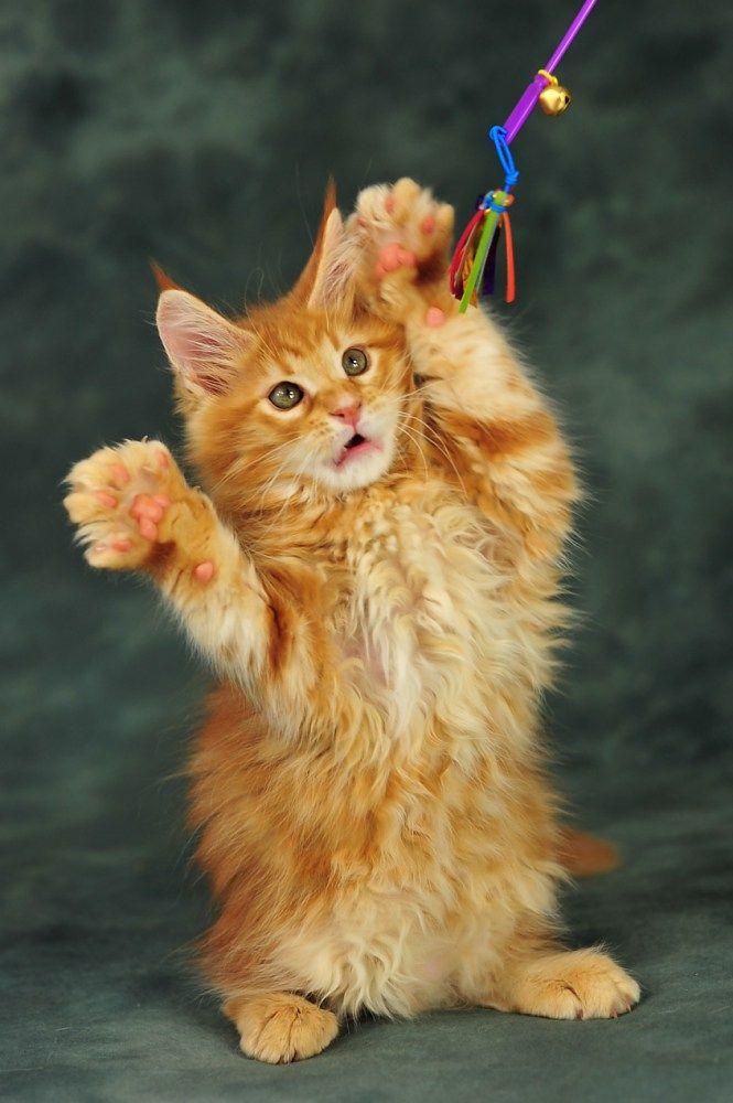 Pin on Precious Kitties