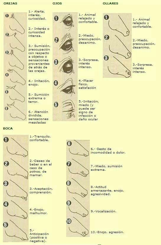 How to identify the mood of  horse behavior story also best horses images on pinterest anatomy animal rh