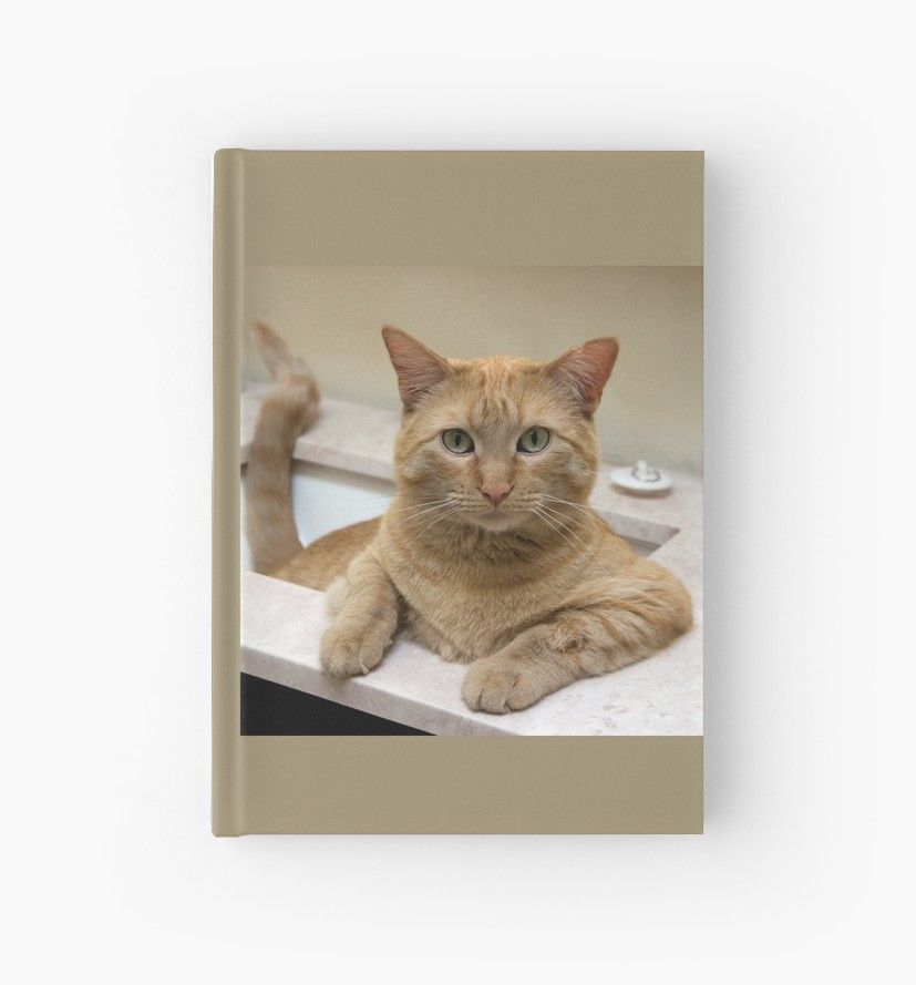 Orange Tabby Cat Sitting In The Sink Hardcover Journal Orange Tabby Cats Cat Sitting Cats