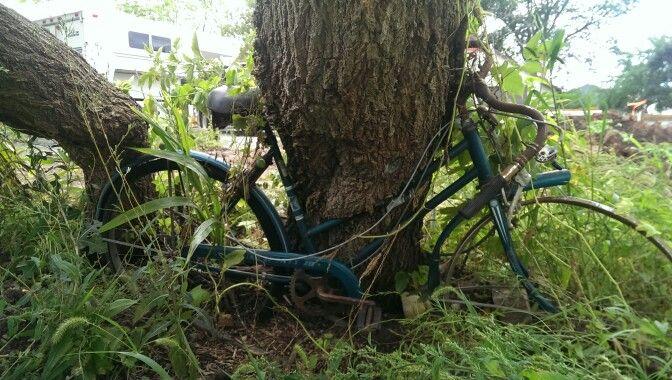 Tree Grows Around Bike Rad Bikes By Chad Pinterest