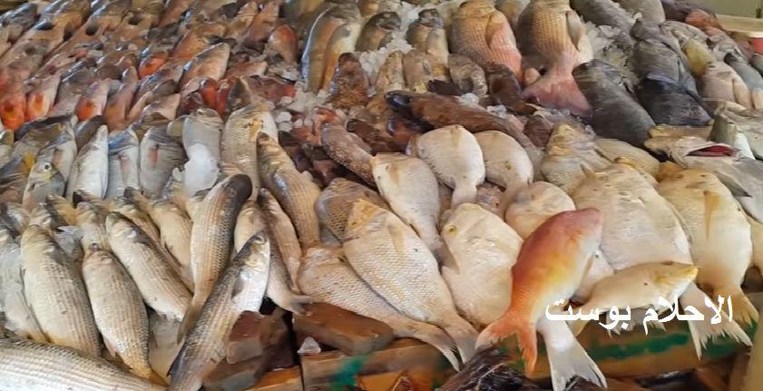 تفسير حلم السمك للحامل والعزباء والرجل وكل دلالات السمك في الحلم الاحلام بوست Hurghada Hurghada Egypt Things To Do