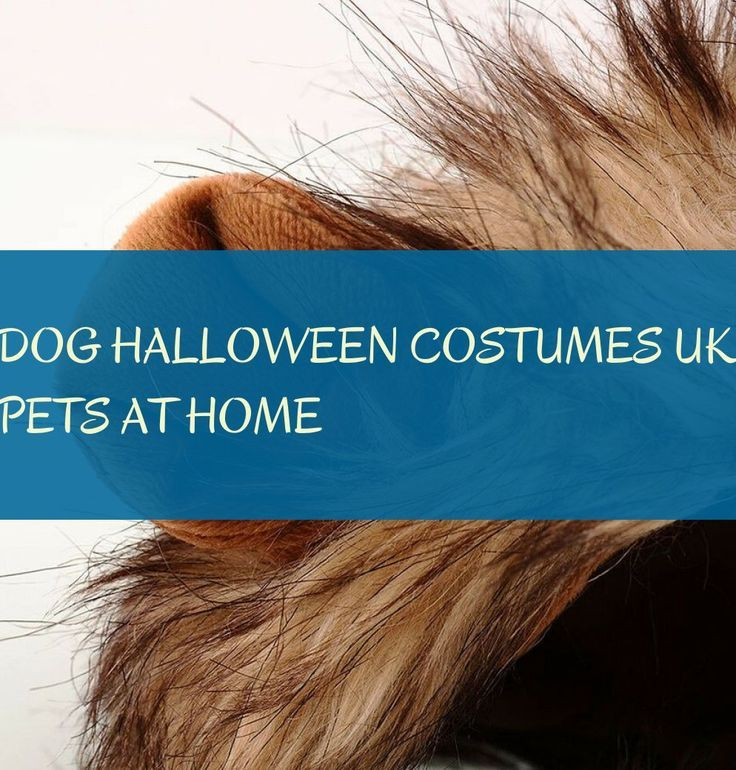 Dog Halloween Costumes Uk Pets At Home Haustierhundehalloween Kostume Grossbrit Halloween Costumes Uk Dog Halloween Costumes Dog Halloween