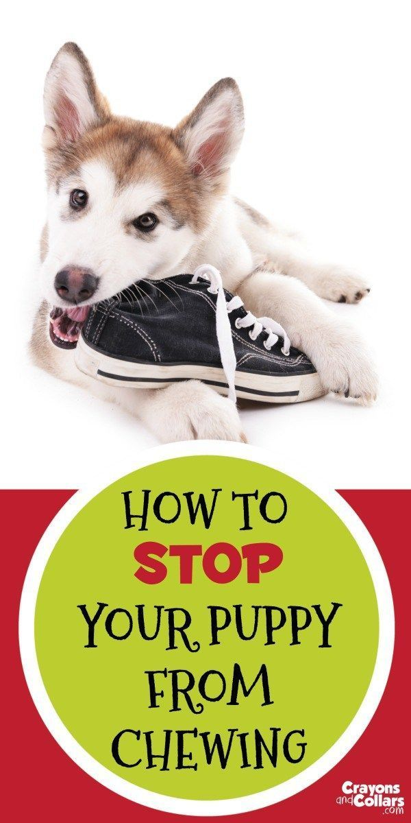 How To Stop Your Puppy From Chewing Training Your Puppy Dog