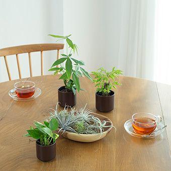 瀬戸焼の鉢に入れた観葉植物 | 無印良品ネットストア