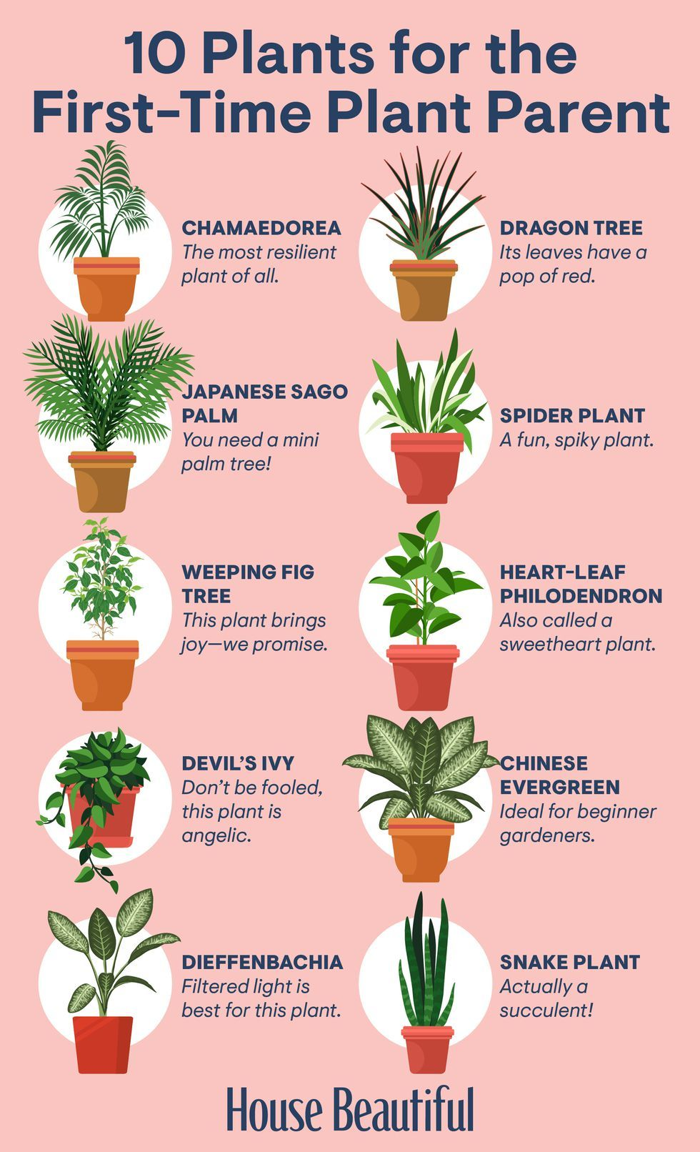 Houseplants That Are Perfect for Gardening Beginners -   17 garden design Low Maintenance house plants ideas