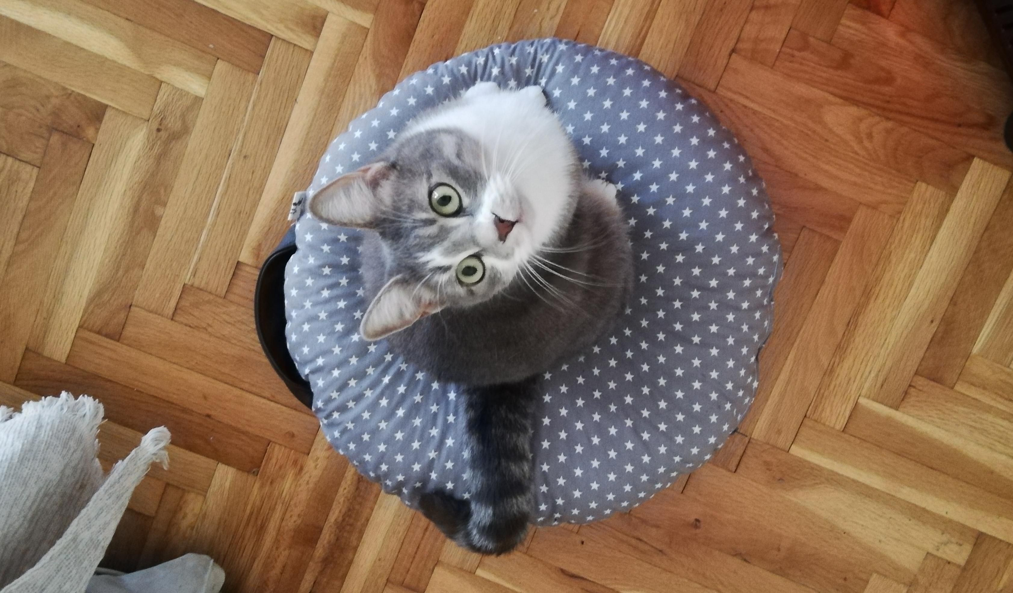 My baby Sophie on her favourite donut bed