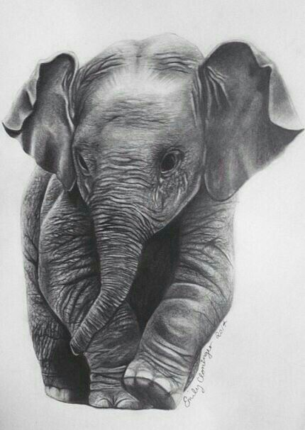 Baby Elephant Sketch Cute Art Images Elefantini Disegnare