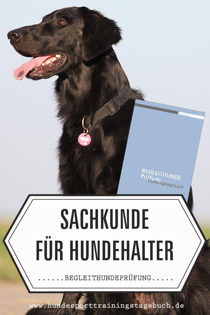 Sachkunde Fur Hundehalter Begleithundeprufung Hundesport Hunde Hundeverhalten Halte Durch