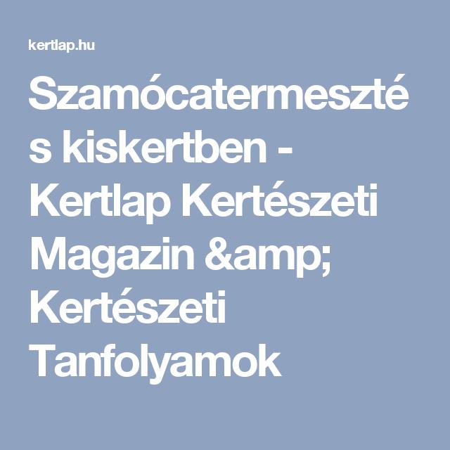 Szamócatermesztés kiskertben - Kertlap Kertészeti Magazin & Kertészeti Tanfolyamok
