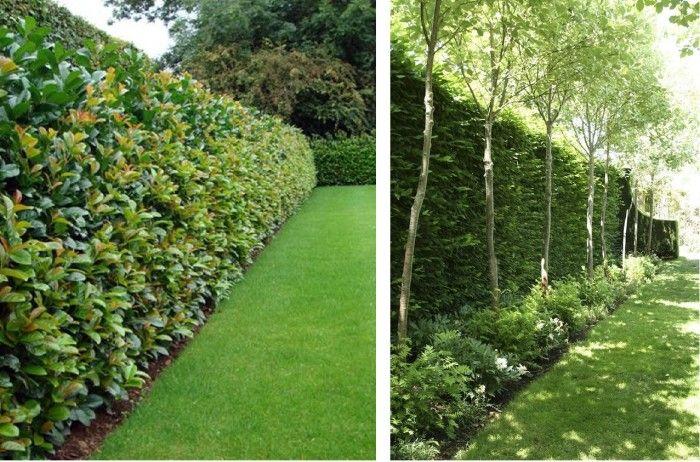 The 25 best plantas para cercos ideas on pinterest - Jardin de bambu talavera ...