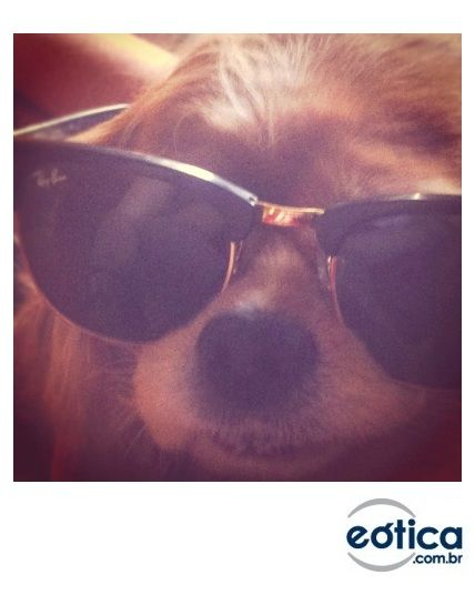 f6b590bba262c Óculos de sol Ray-Ban Club Master  oculosdesol  sunglasses  clubmaster   rayban