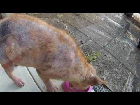 Emotional Neglected Dog Rescue And Transformation Safe Perth Youtube Rescue Dogs Homeless Pets Animal Rescue