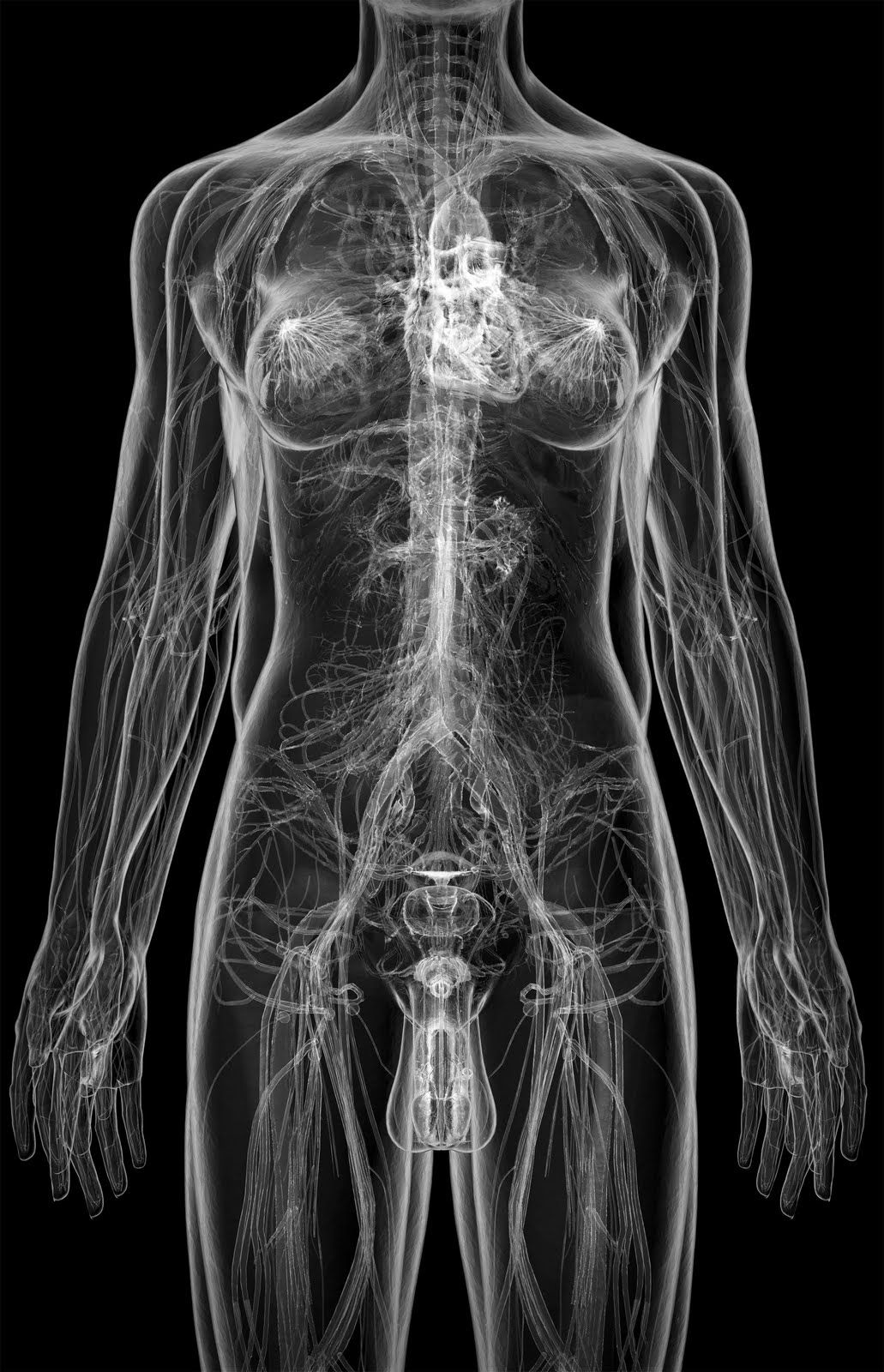 Pin By Chanel Kang On Fyp Mood Pinterest Anatomy Human Body And