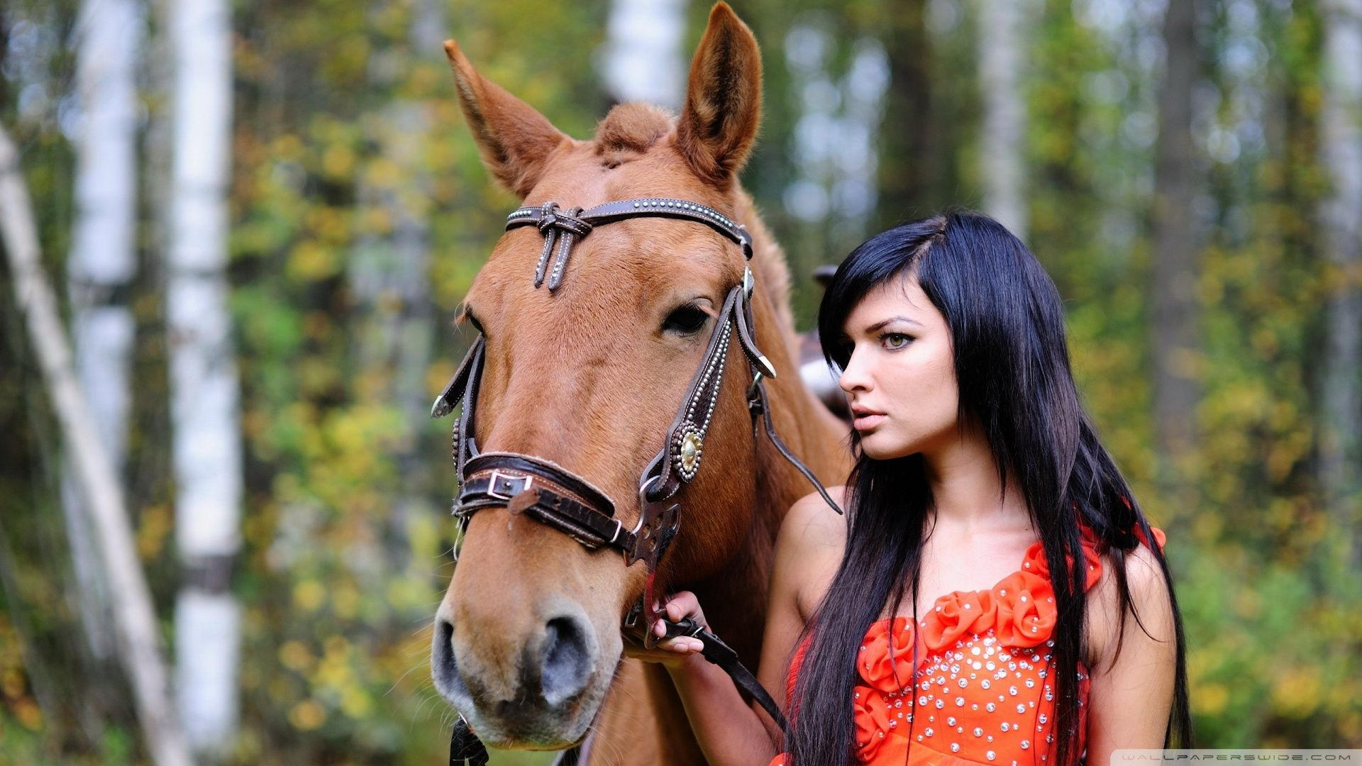 Wonderful Wallpaper Horse Girly - f4a7af9c7a81d86372069e4fb92a1165  Best Photo Reference_809689.jpg