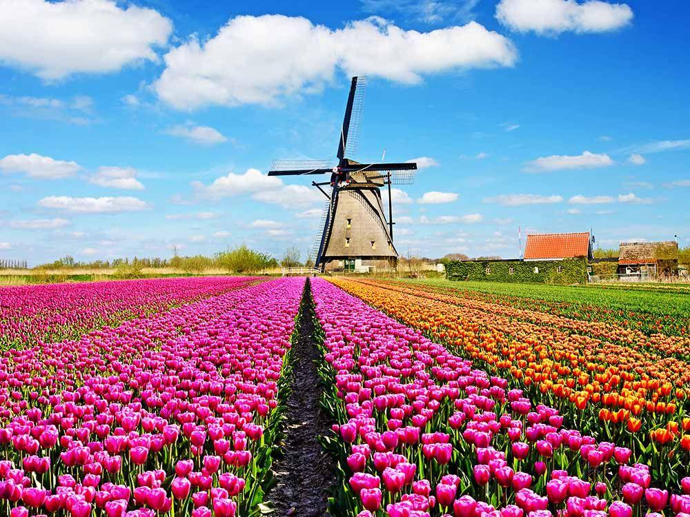 Keukenhof The World's Most Stunning Flower Garden
