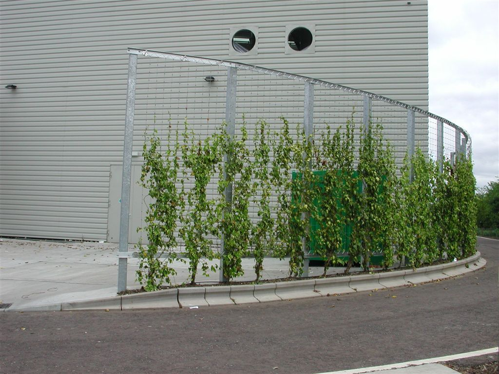 Green wall cool pretty vine but i would suggest bamboo for Living screen fence
