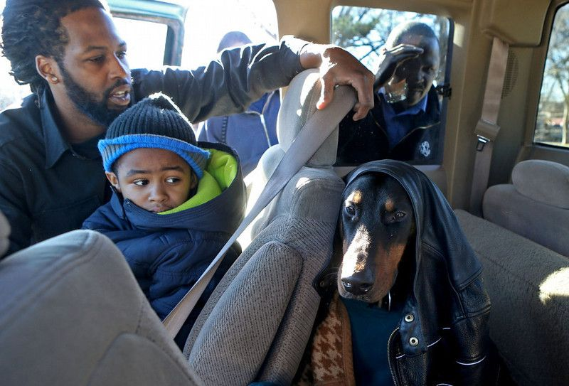Description of . Jason Newsome, left, puts  Diablo, in the back seat of his truck as his son, Juelz Newsome watches. Newsome was taking the ...