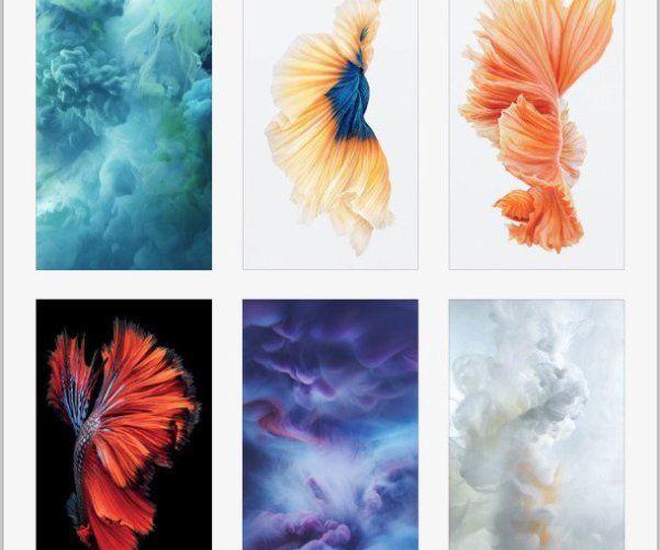 Живые Обои Коралловые Рифы Для Windows 7