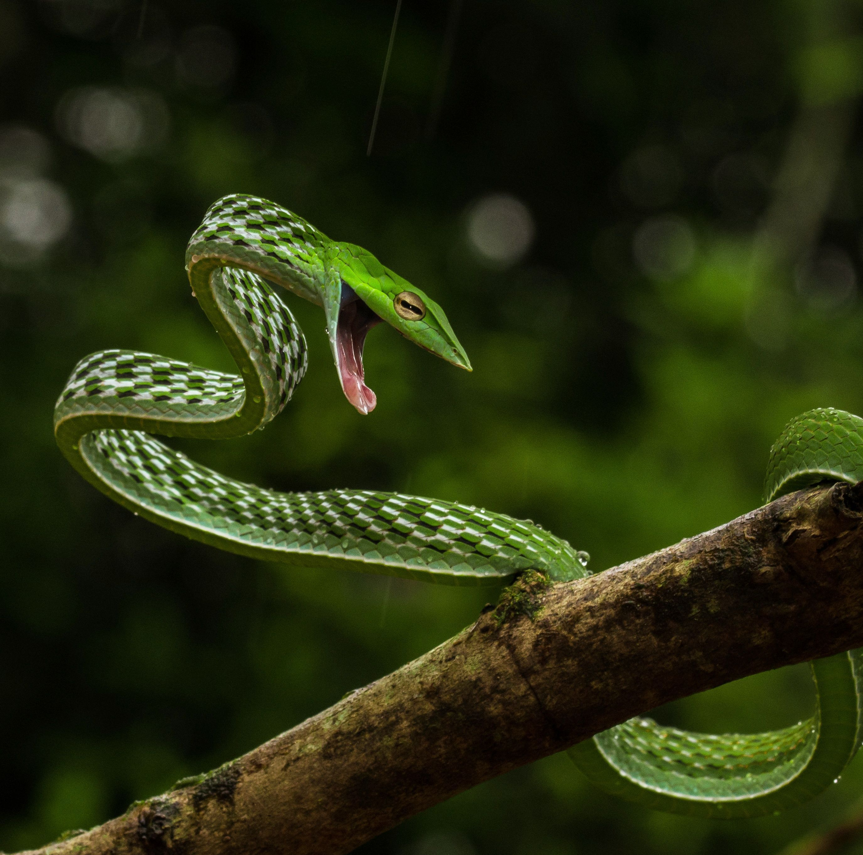 Photo of the Day | Places to Visit | Vine snake, Snake, Snake images