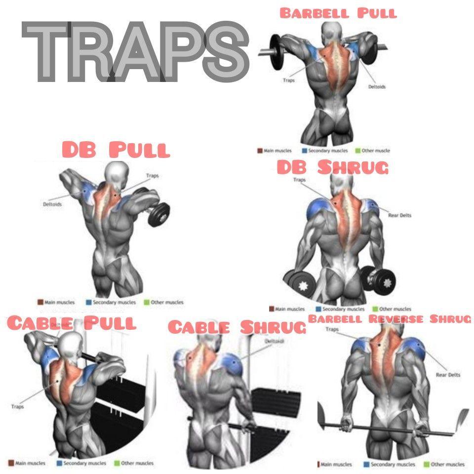 Traps #trapsworkout My Favorite Trap Workouts #trapsworkout