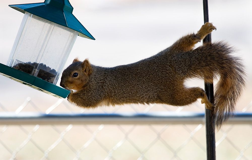 8 ways to keep squirrels away from your bird feeders