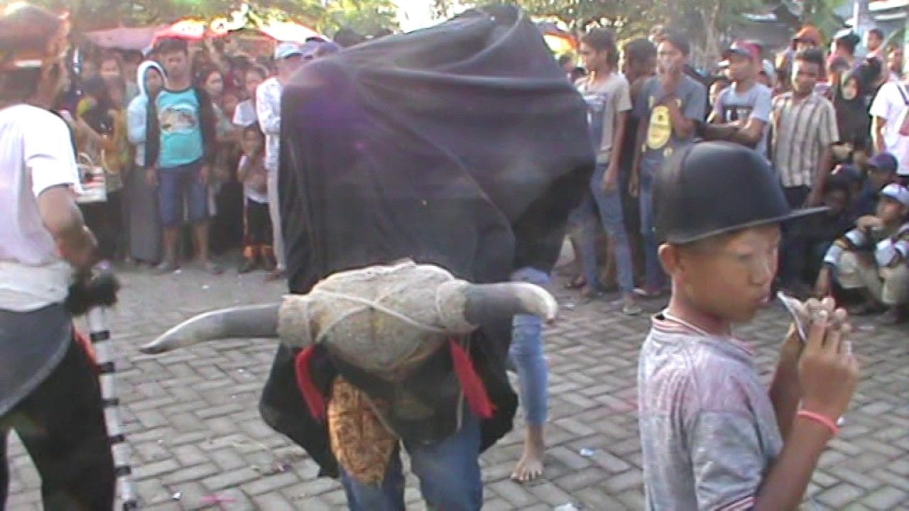 Video Banteng Gindrang