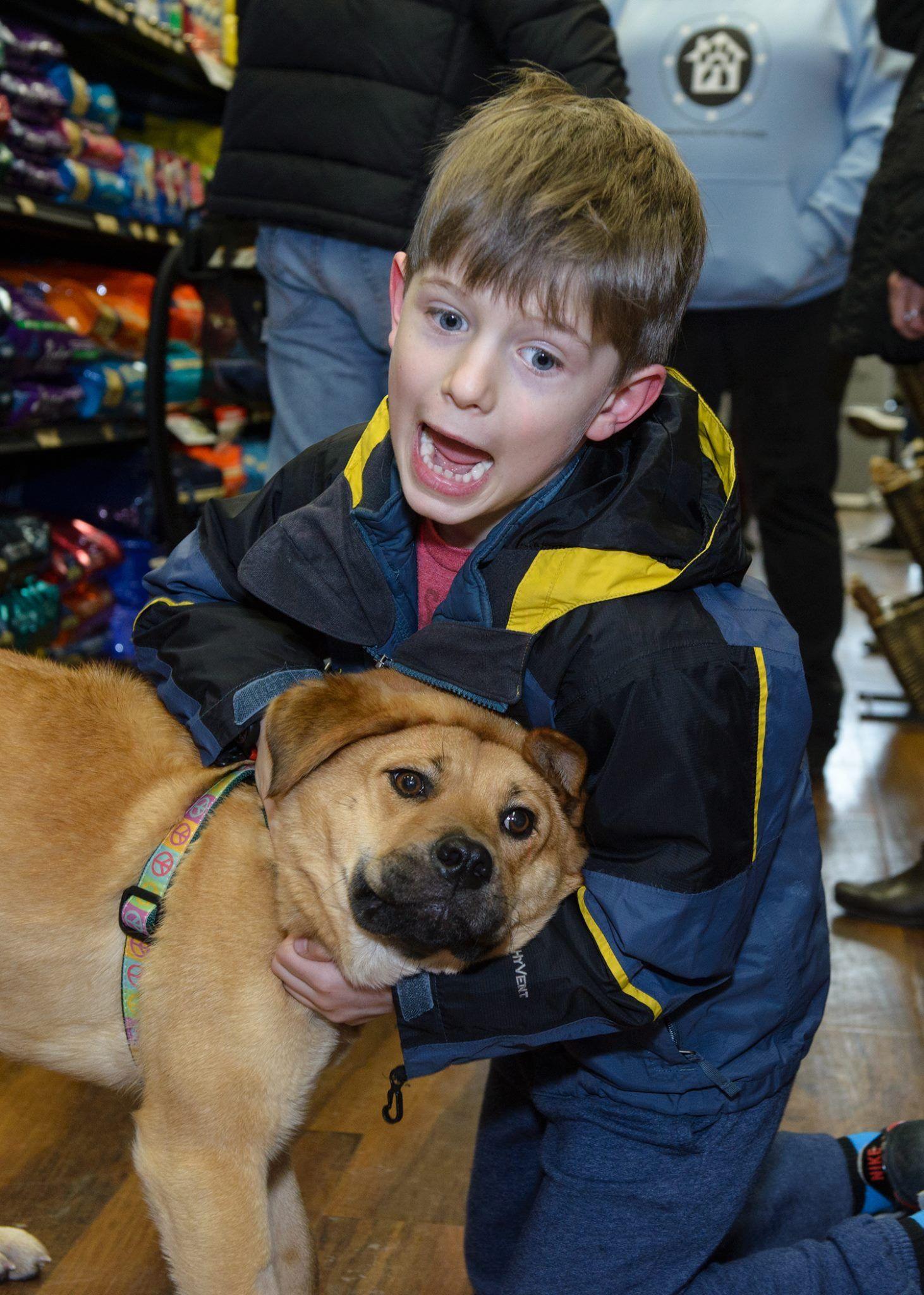 Pet Valu Event Dog Adoption Volunteer Animals