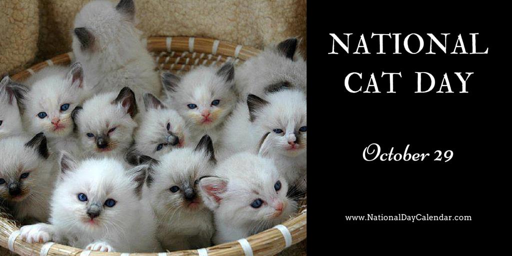 National Cat Day October 29 National Day Calendar Cat Day National Cat Day Cats