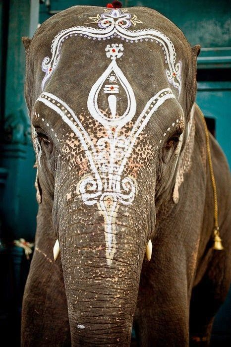 India... elephant with traditional decoration...
