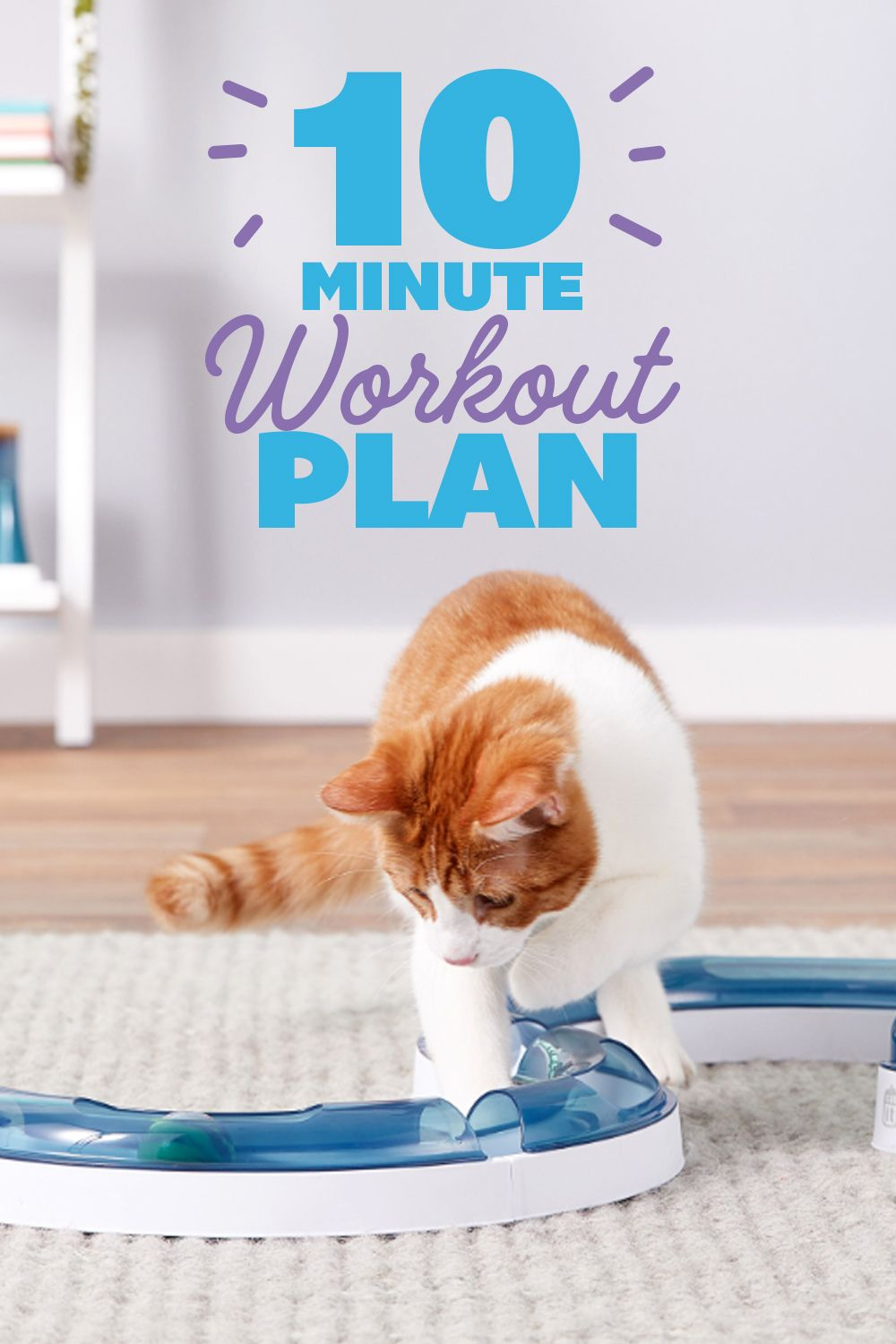 Overweight Cat Solution 10 Minute Fit Cat Workouts Cat Workout Overweight Pet Obese Cat