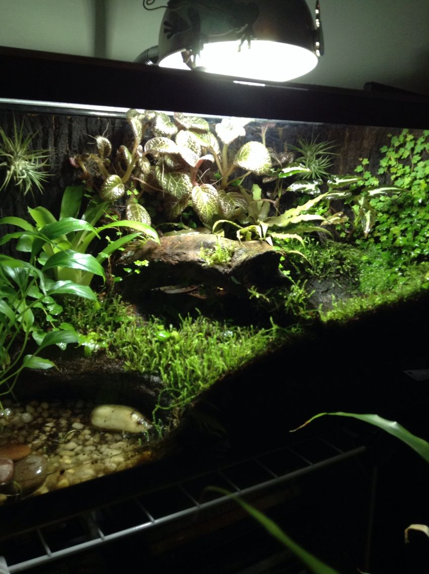My 10 gallon Dendrobates leucomelas vivarium with moss all ... 10 Gallon Vivarium