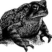 TOADS https://records1001.wordpress.com/