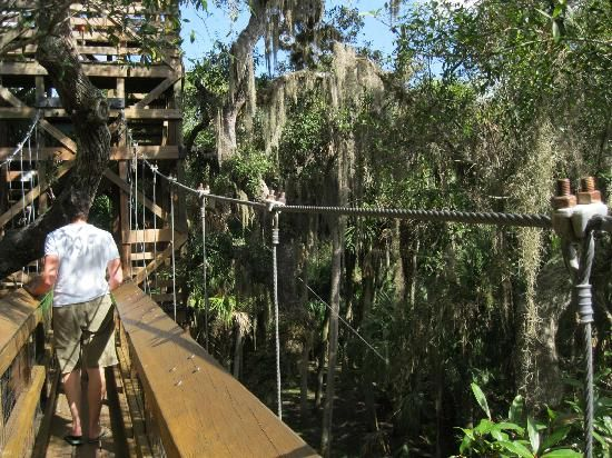 Canopy Walkway suspension bridge Sarasota Florida state park | Places to Go! Things to Do! | Pinterest | Sarasota florida Park and Bridge & Canopy Walkway suspension bridge Sarasota Florida state park ...