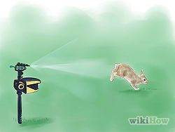 Get Rid of Rabbits | Playin' in the Dirt | Garden pests ...