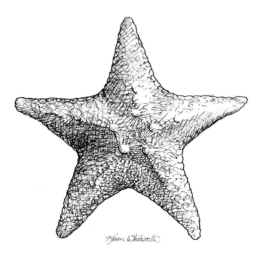 Starfish drawing black and white sea star by karen whitworth