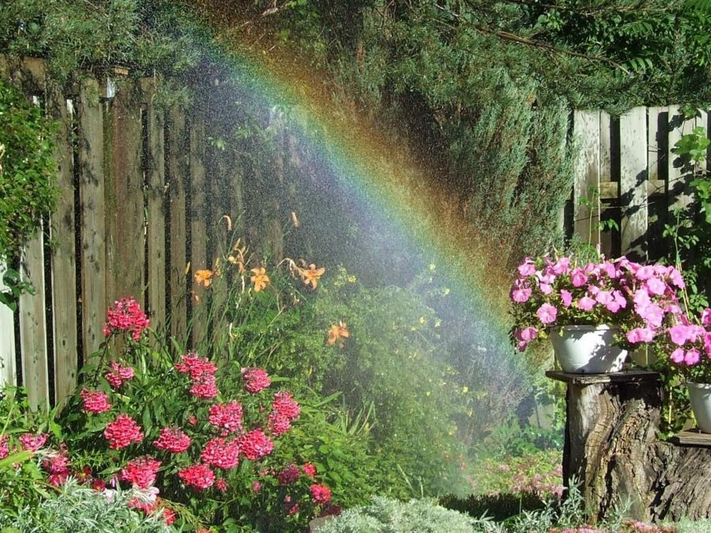 Rainbows Free Download Download Wallpaper Rainbow Flowers Rain Free Desktop In Rainbow Flowers Beautiful Gardens Rainbow Rain