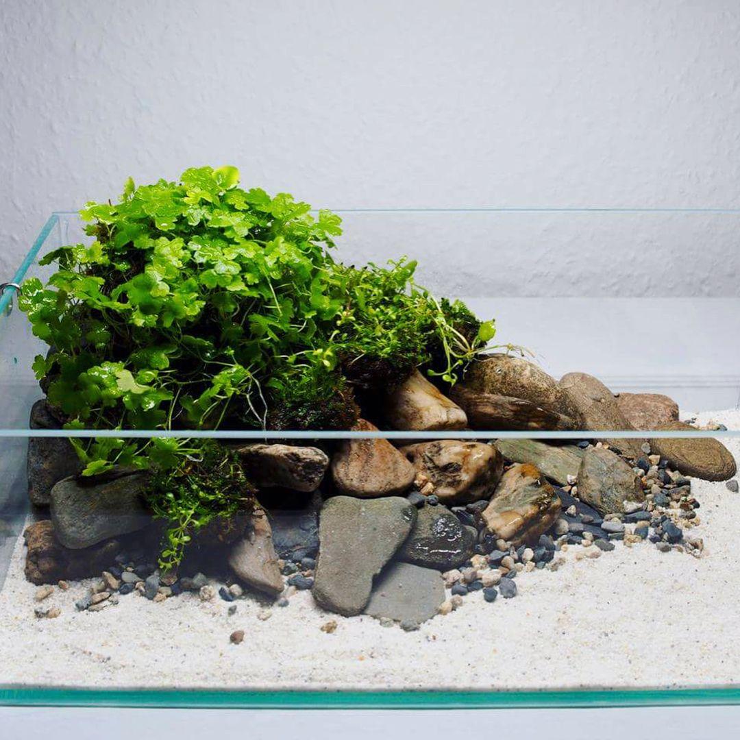 Xz S 3ft High Tech Low Tech Nano Experiments The Planted Tank Forum Low Tech Aquascape Planted Aquarium