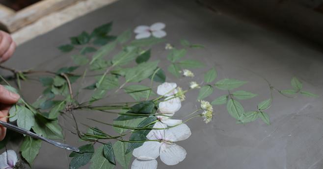 Blog sul garden design; vasi, mobili da giardino, botanica, schede di fiori e piante, decorazioni floreali, piccoli progetti creativi fai-da-te.