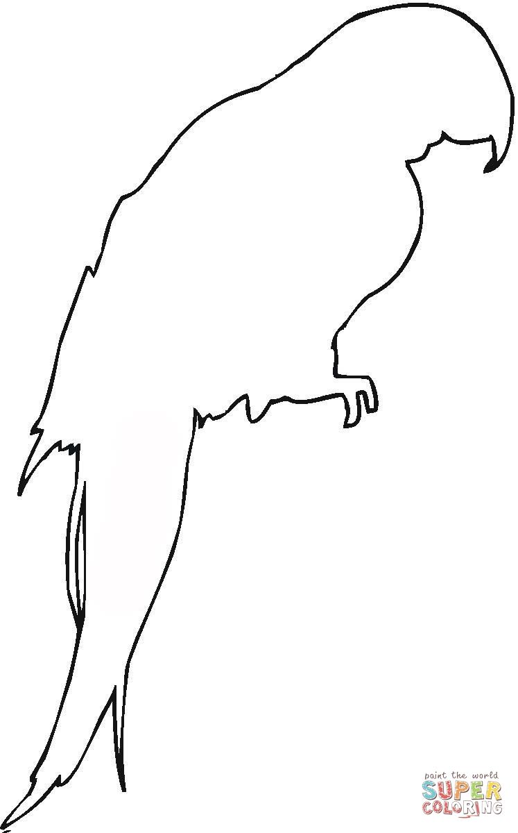 Parrot Outline Google Search Animal Outline Animal Coloring Pages Animal Templates