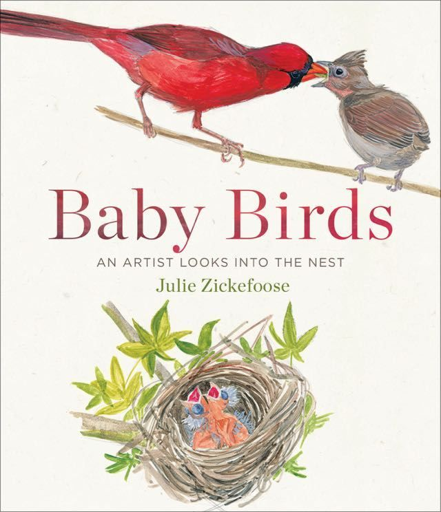 baby birds: an intimate look inside the nest, with julie zickefoose