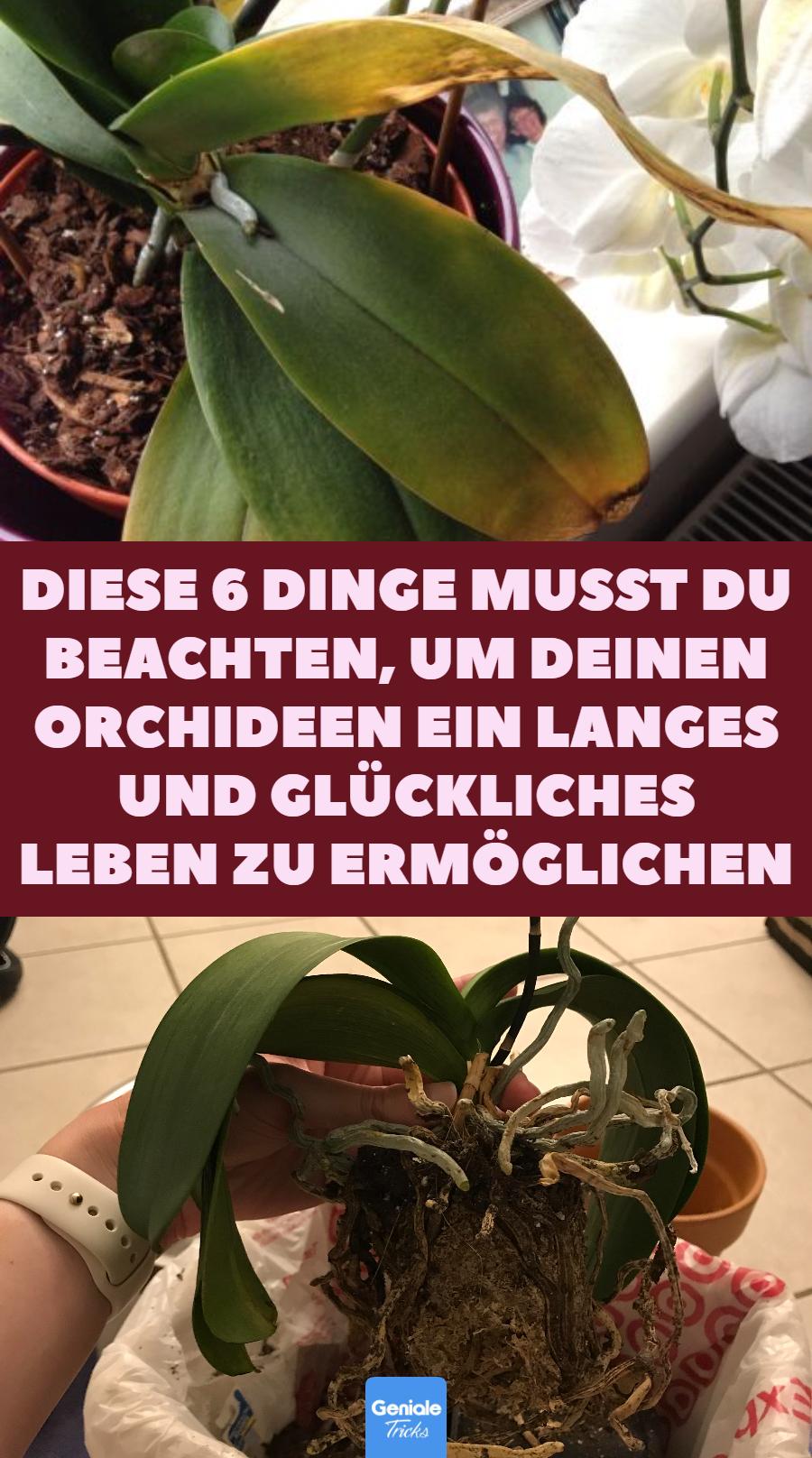6 Dinge, die man bei der Orchideen-Pflege beachten muss