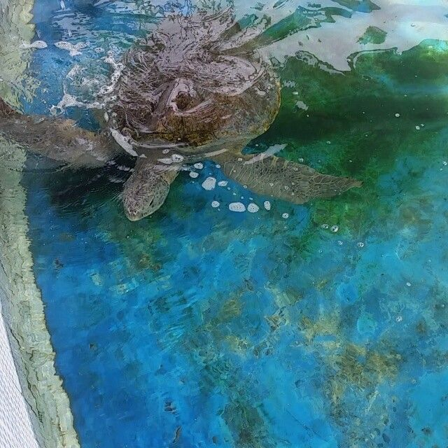 Giant turtles are mesmerizing... unique creatures and yet vulnerable.