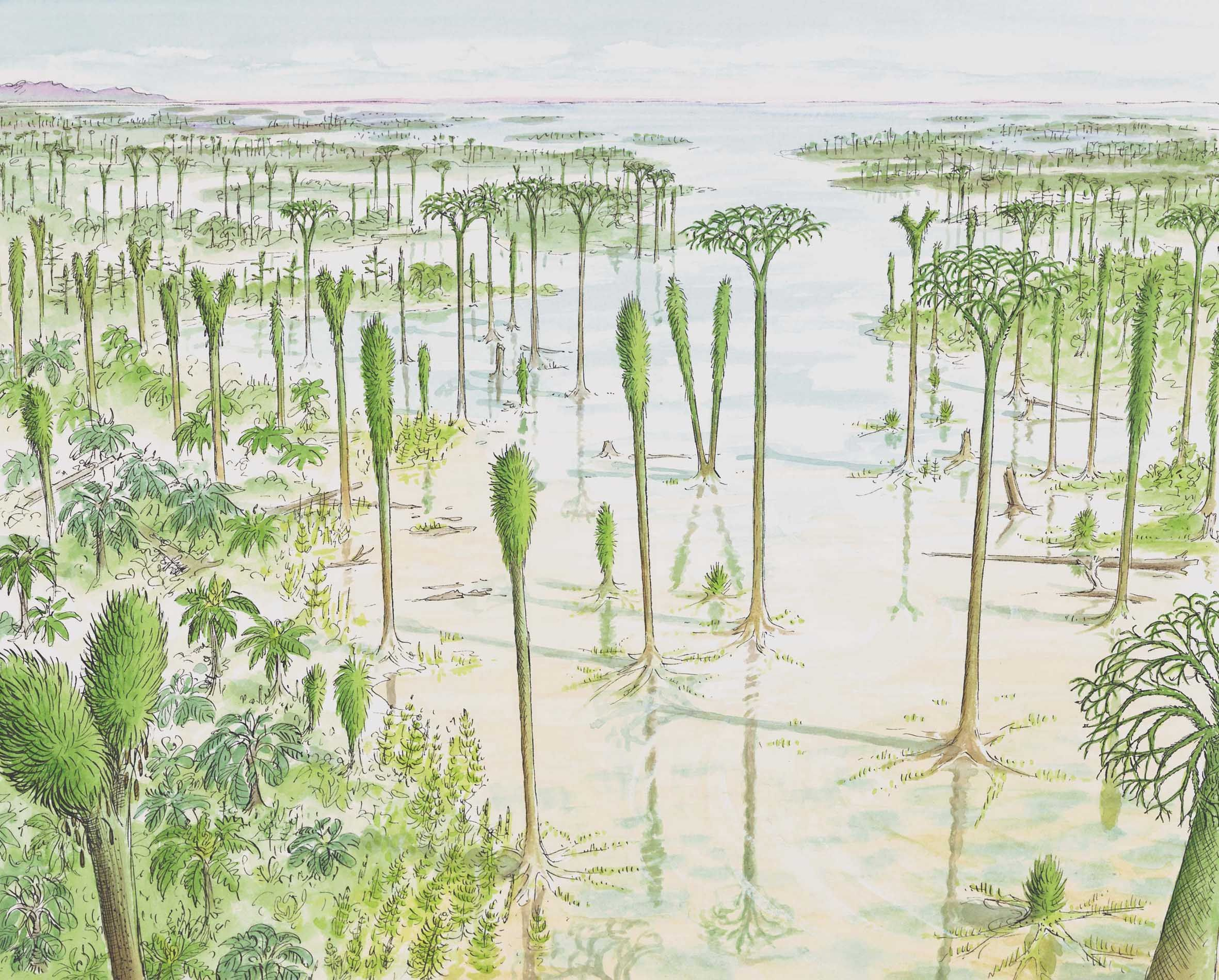 Carboniferous Coal Swamp Created With Guidance From Bill Dimichele
