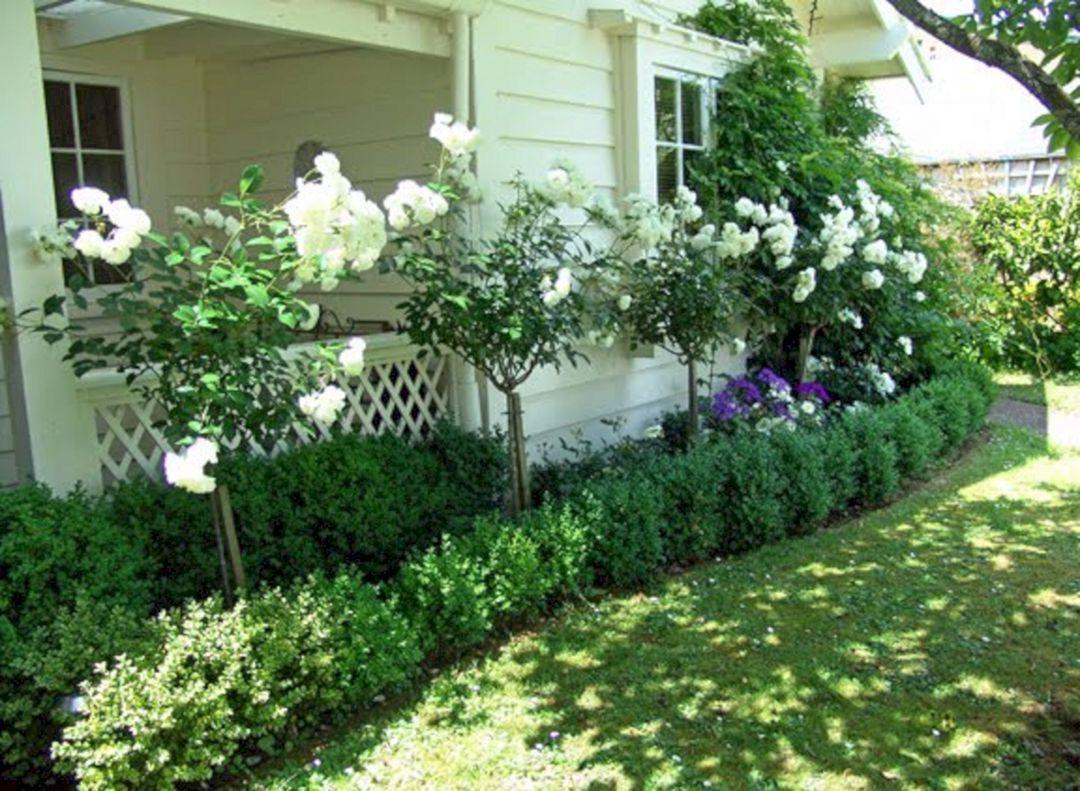 40+ Awesome Eden Rose Garden To Enhance Your Beautiful Garden ...