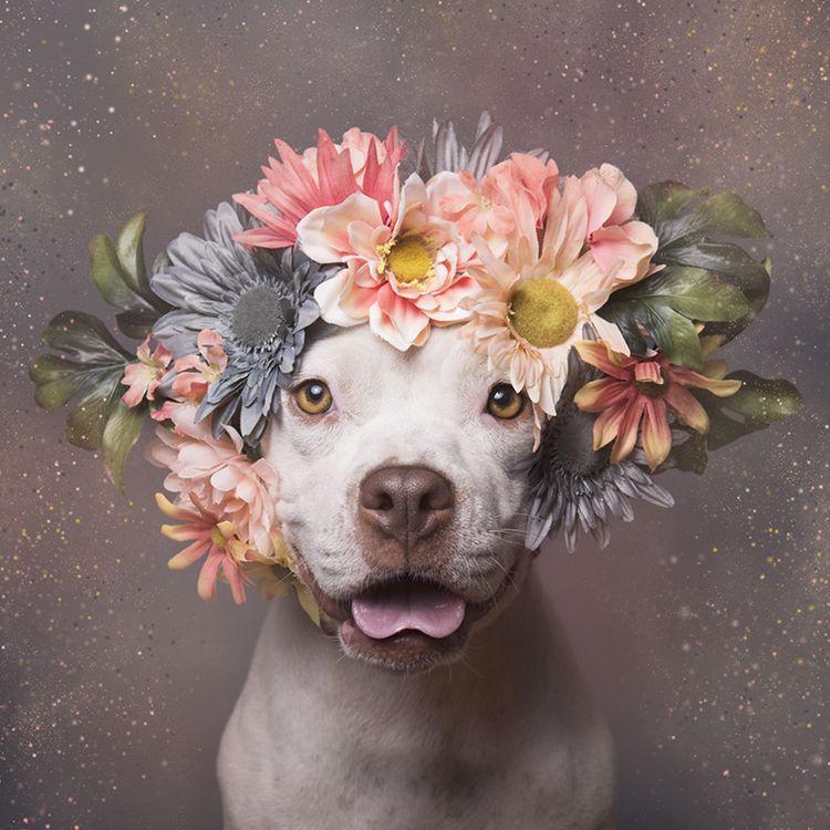殺処分予定の犬が お花 と一緒に写真を撮ったら 600匹以上の里親が見つかる 犬 可愛いワンちゃん 里親
