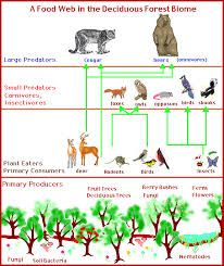 Temperate Forest Food Web Google Search Deciduous Forest Biome